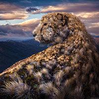 Cheetah | fotobewerking