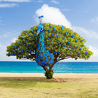 Peacock tree | fotobewerking