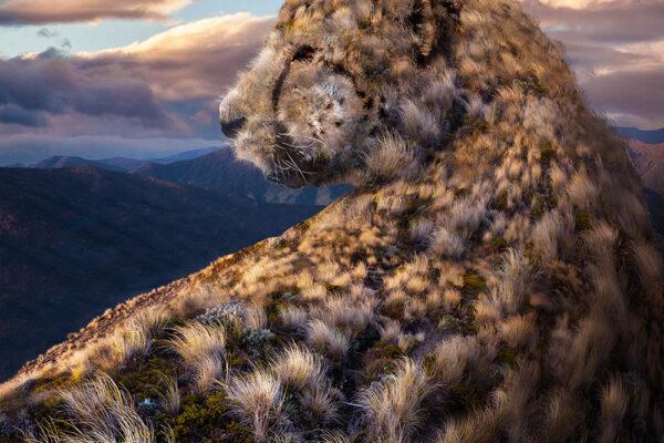 Vrij werk | Cheetah