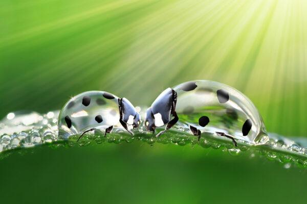 Vrij werk | Droplets of ladybugs