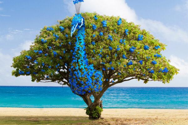Vrij werk | Peacock tree